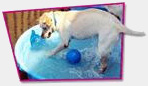 Happy Tails Dog Spa Franchise
