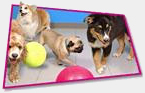 Happy Tails Dog Spa Franchise for Sale